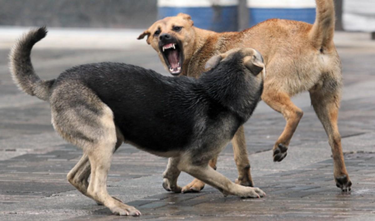 Будьте бдительны напала, собака