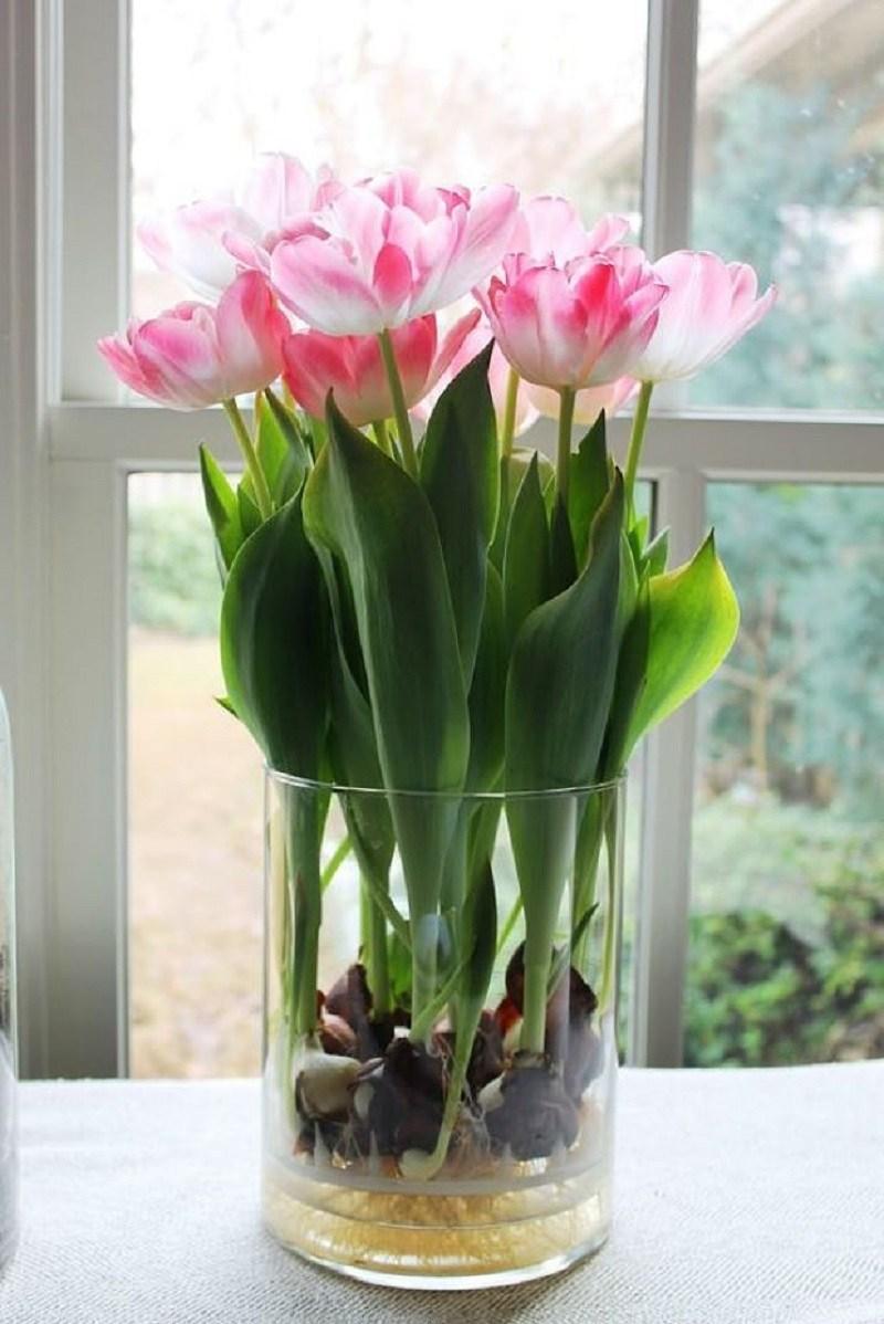 Тюльпаны в домашних условиях фото