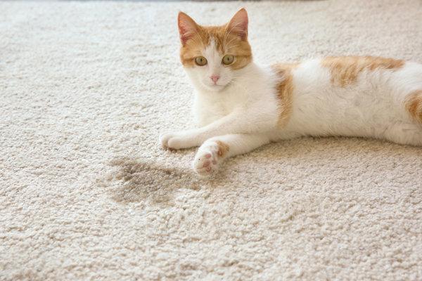 Картинки по запроÑу удаление кошачьей (и не только) мочи навÑегда