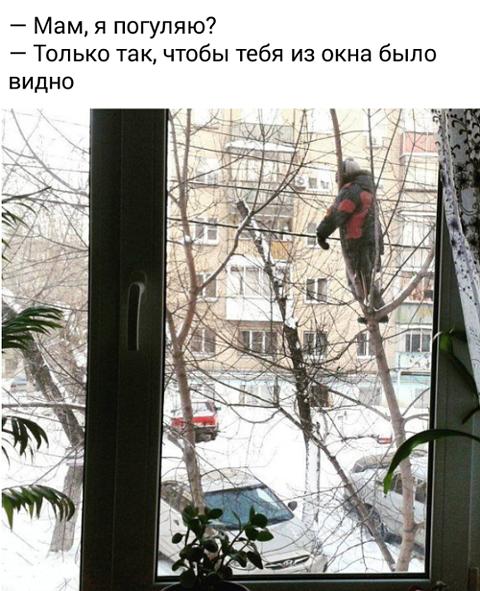 изображение: - Мам, я погуляю? - Только так, чтобы тебя из окна было видно #Прикол
