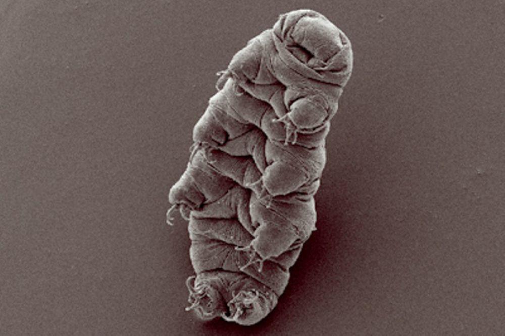 Топ-10 организмов, способных выжить в ядерной войне