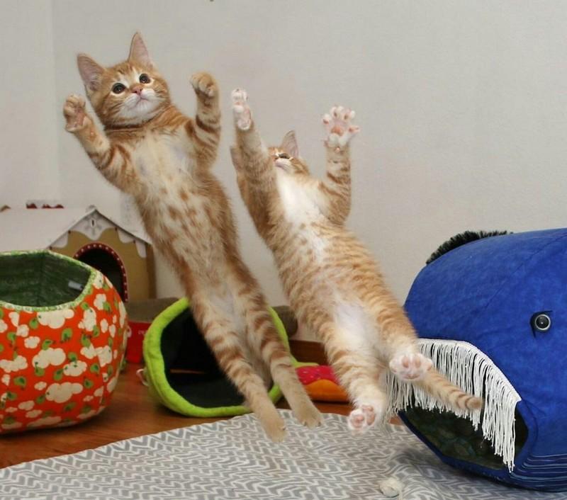 Забавные смешные кошки приколы с кошками фото