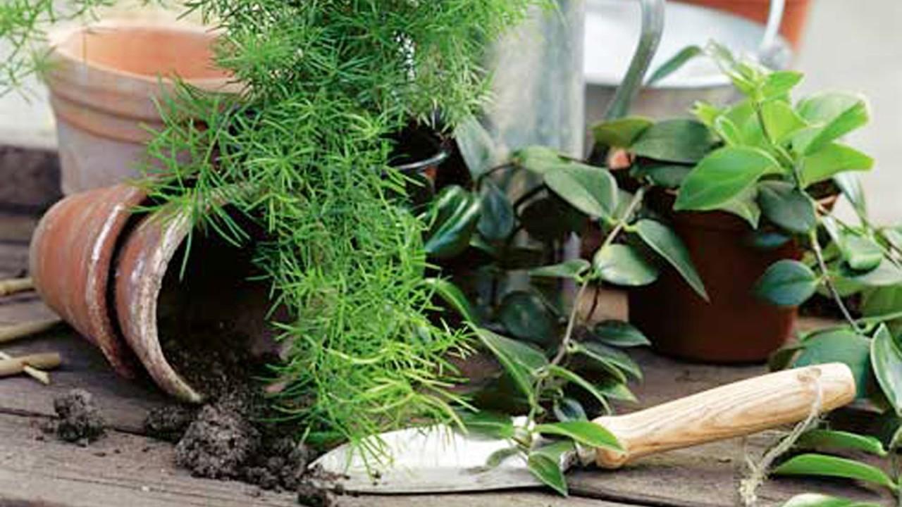 Картинки по запросу Пересадка комнатных растений