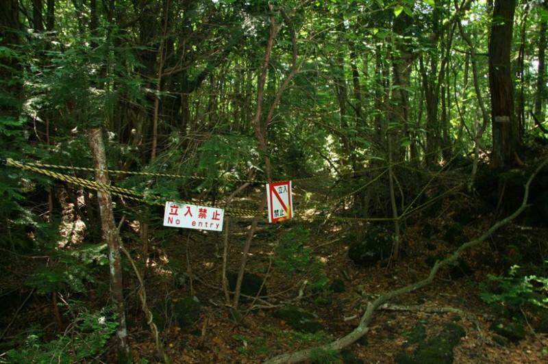 5. Лес самоубийц, Япония интересное, история, поучительное, факты