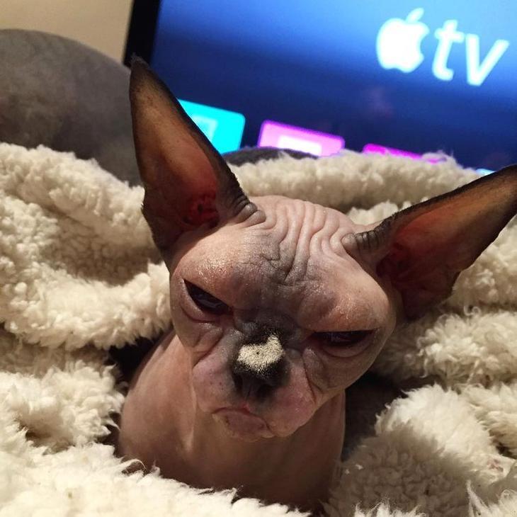кошки которые хотят вас убить, моя кошка хочет меня убить, злые кошки