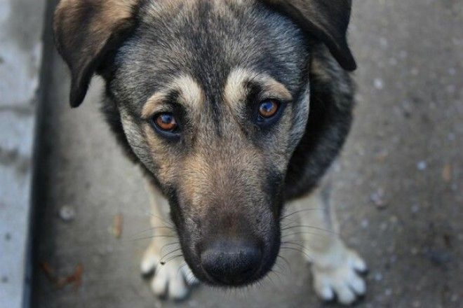 15+ фотографий беспородных собак, которые излучают любовь и нежность