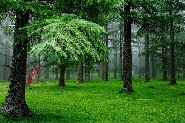 воздух в хвойном лесу практически стерилен