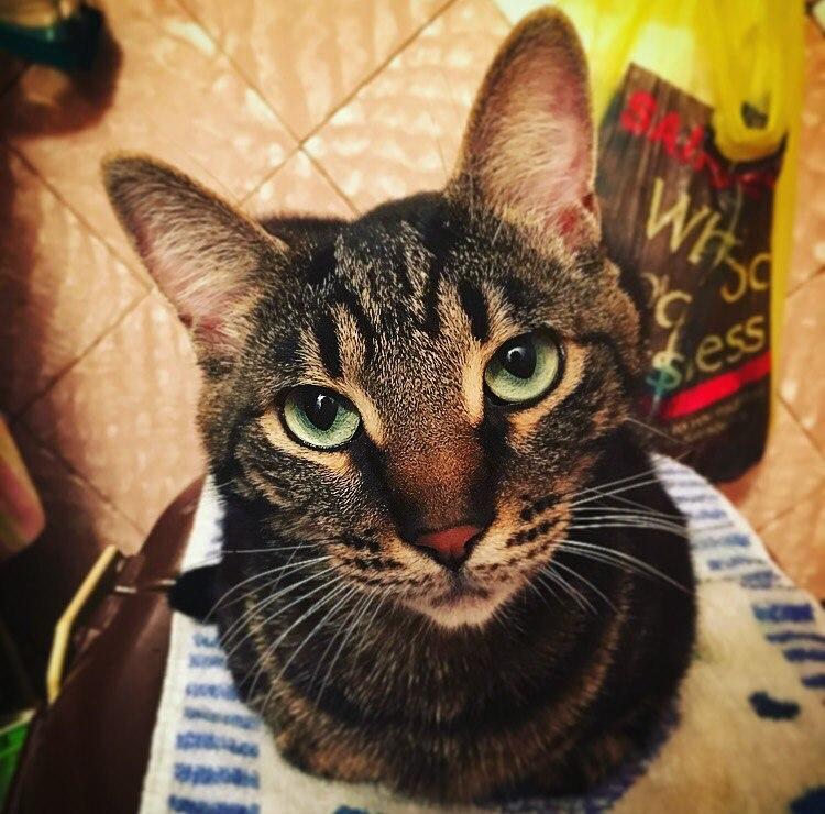 Они вцепились в счастье лапками… 2 счастливые истории о котах, которые пытались выжить на улице