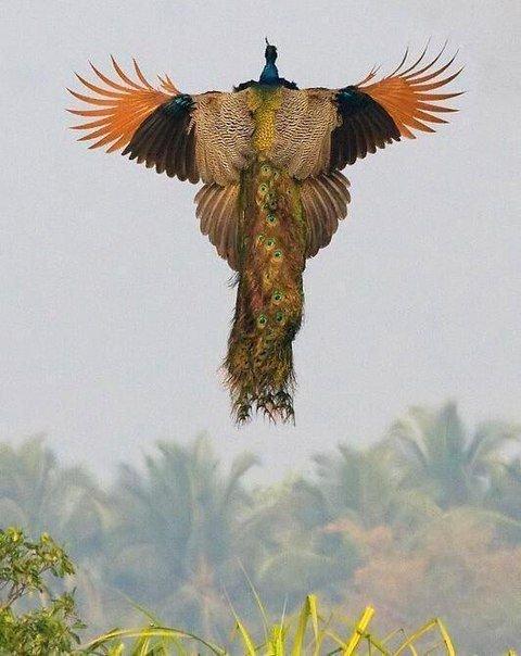 Красота птичьего полета великолепие, животные, интересное, красота, полет, птицы, факты
