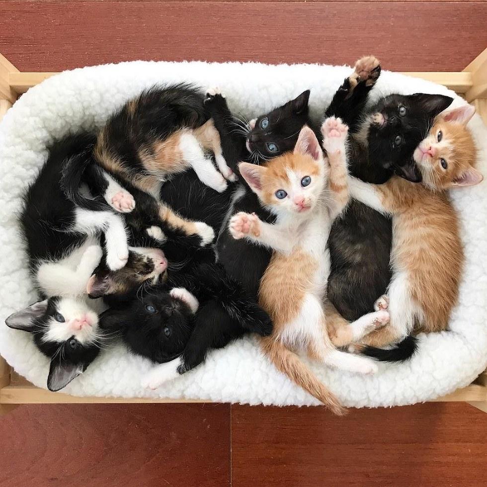 это обратили несколько фотографий одного котенка паста относится