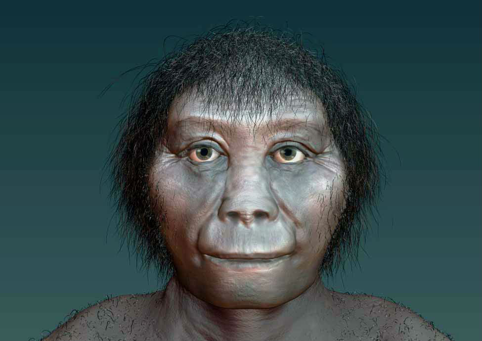 "Индонезийский ""хоббит"" наконец обрёл своё место на эволюционном древе"