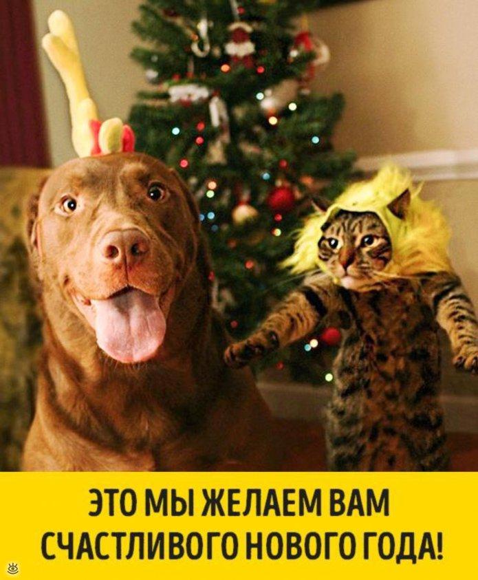 Готов к новому году картинка