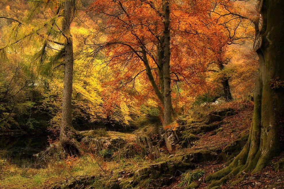 Лес у деревни Кинлочлвен, Шотландия