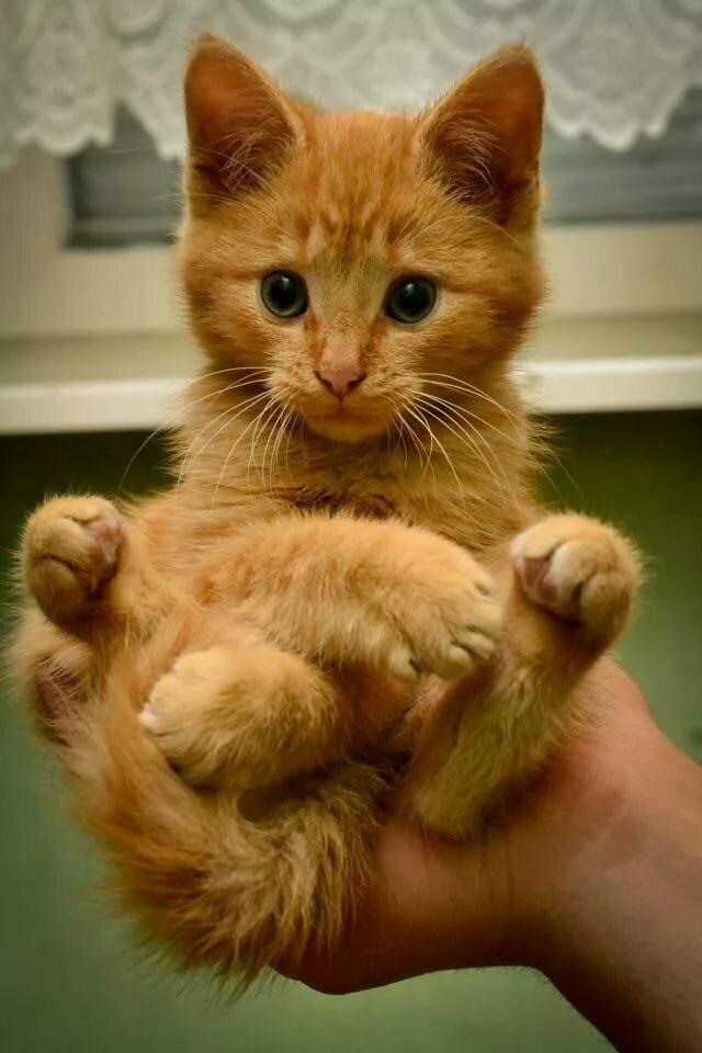 Возьмите вот этого, рыжего. Вы знаете, рыжие коты приносят счастье