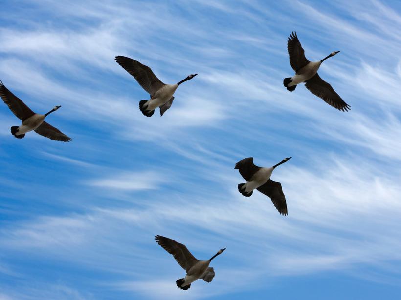 птицы летят косяком картинка приятно стало душе