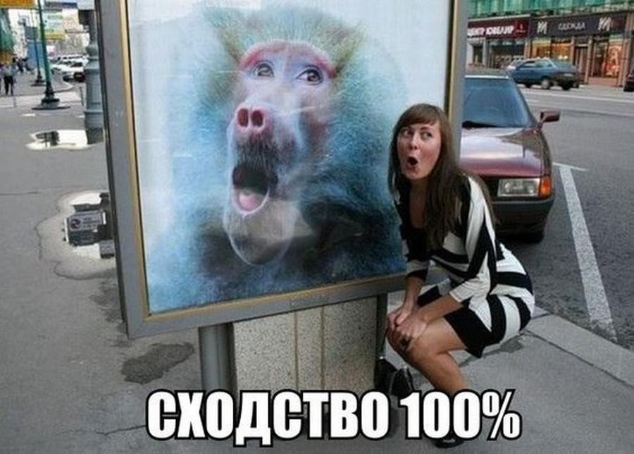Веселые надписи к жизненным фотографиям для улыбки