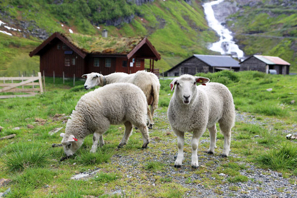 В Норвегии появилась полиция для животных