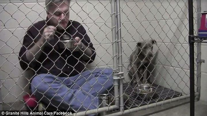 Заботливый ветеринар позавтракал в клетке с испуганной и брошенной собакой, чтобы успокоить её