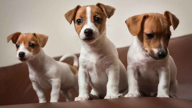 Учёные определили возраст максимальной миловидности щенков