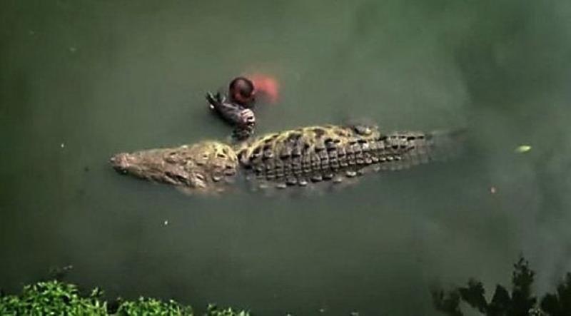 Намного легче общаться с самцами, чем с самками. И чем моложе крокодил, тем легче будет наладить с ним контакт животные, жизнь, крокодил, люди, почо, рыбак, чито