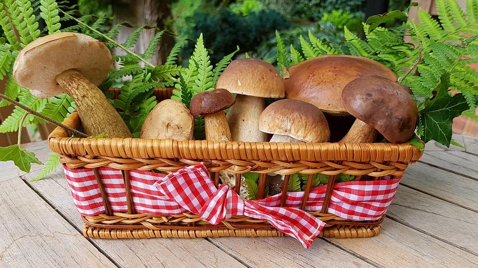 Чем полезны леÑные грибы