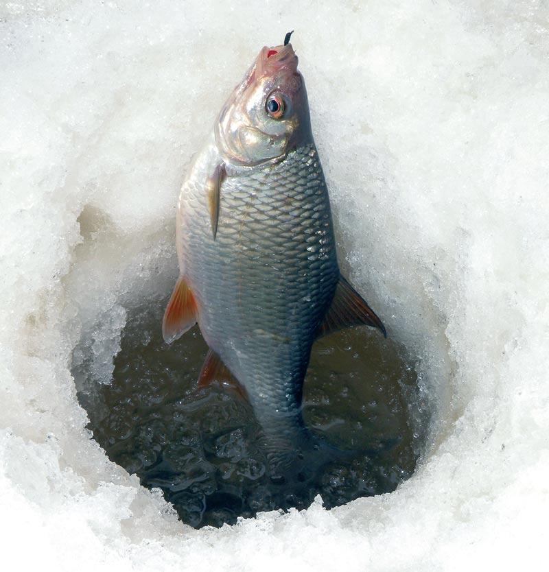 Зимняя рыбалка плотвы на мормышку