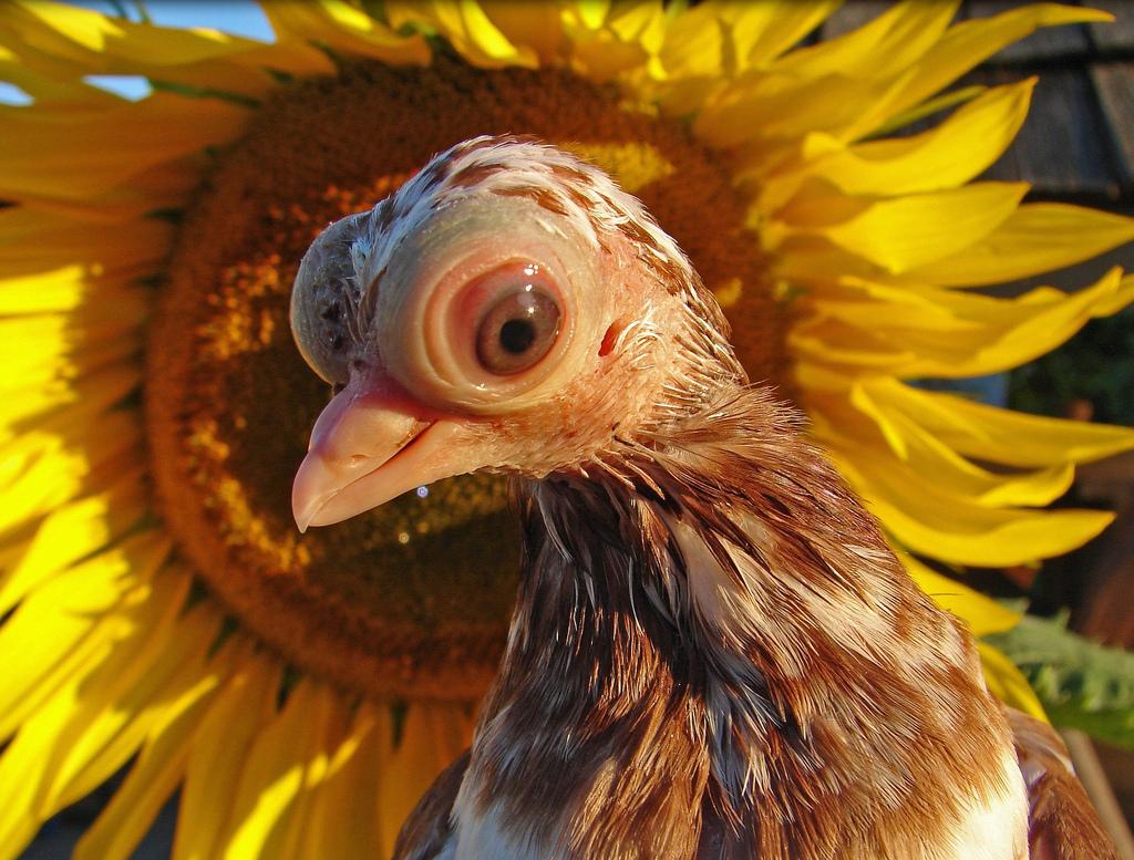самые смешные птицы мира фото тяжело