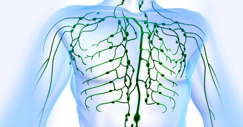 Узелковое письмо: О каких болезнях нас предупреждают лимфатические узлы