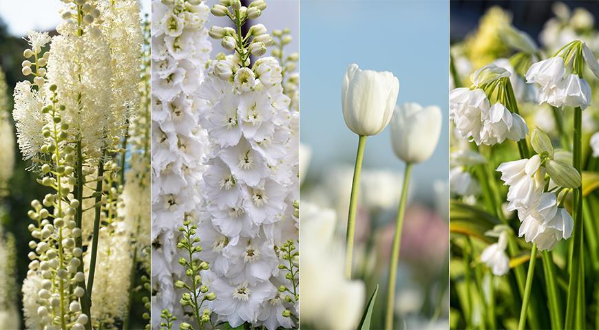 Белые цветы для монохромного сада: 50 лучших белоснежных садовых растений