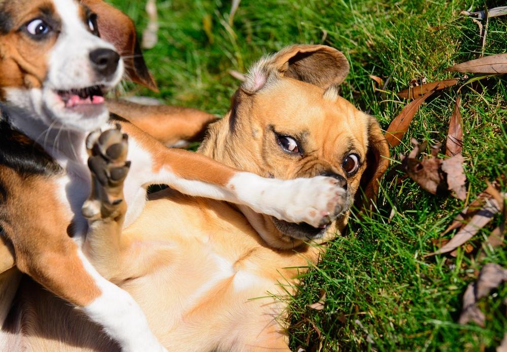 интересные смешные фотографии животным