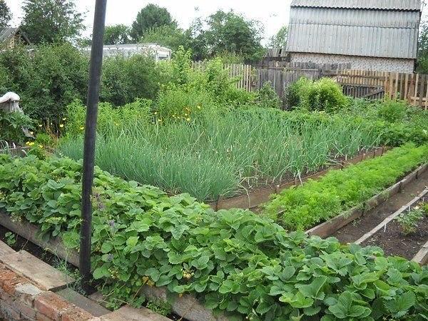 сайт огород урожайный год