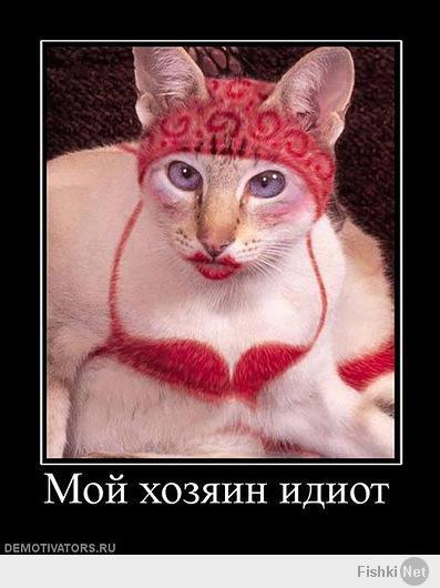 Самим открытку, кот дебил прикольные картинки