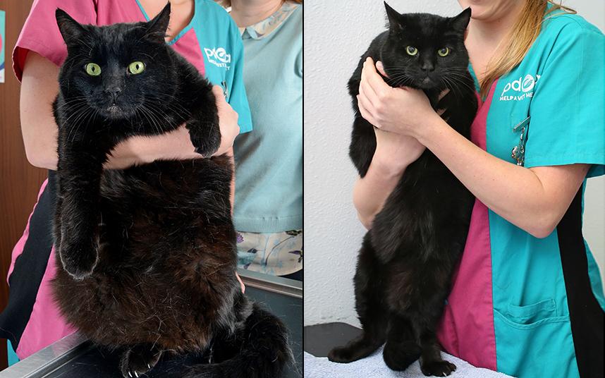 Причина резкого похудения кота