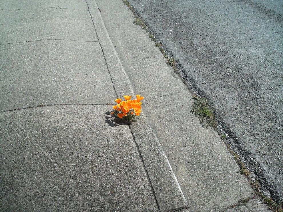 Цветы на тротуаре
