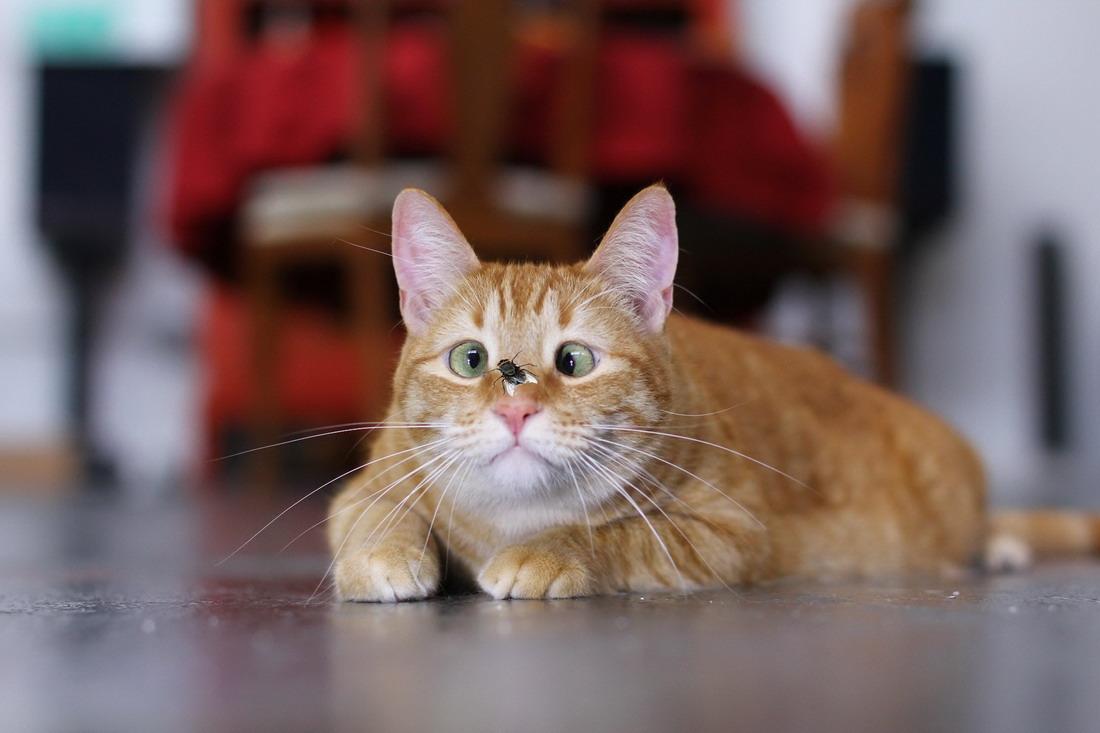 фото выпендрежной кошки сражение