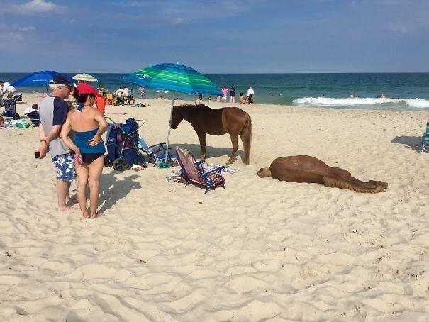 Лошади умеют тоже плавать. И загорать Вот это ДА, забавно, находки, неожиданности, пляжи, смешно, странные вещи, удивительное рядом
