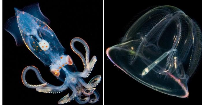 Cветящиеся жители подводных глубин