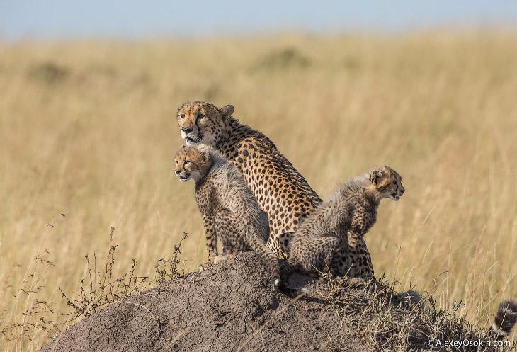 У этих зверей лучшие матери в мире животных