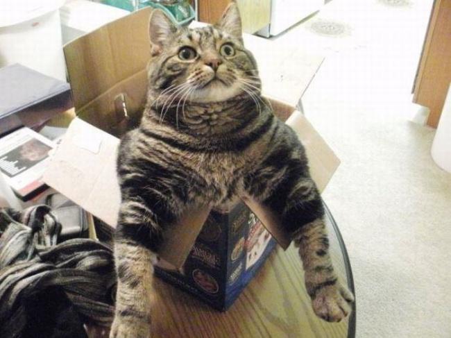 Мы в восторге от котов, потому что…
