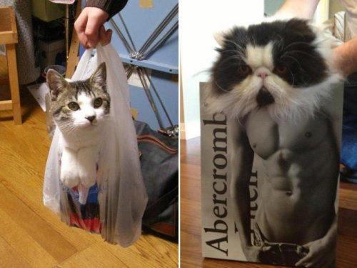 Картинки по запросу пресс у кота