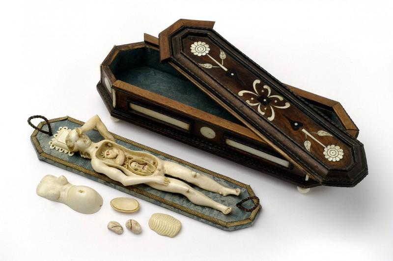 9. Анатомическая модель беременной женщины. А футляр в виде гроба служил напоминанием, что изучать анатомию можно лишь на умерших людях, около 1680 года.