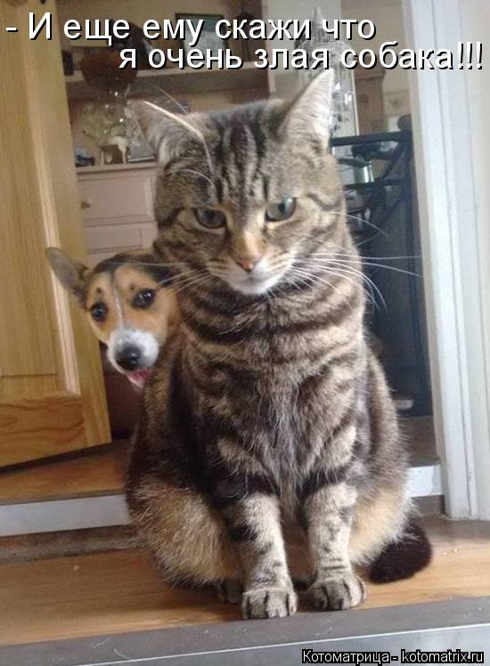 Котоматрица: - И еще ему скажи что я очень злая собака!!!