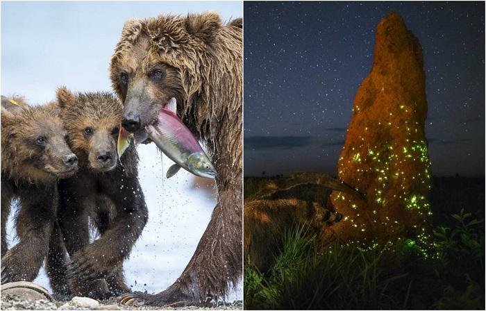 Красота и жестокость: Завораживающие снимки финалистов международного конкурса Wildlife Photos of the Year 2017