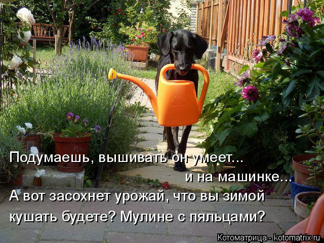 Котоматрица: Подумаешь, вышивать он умеет... и на машинке... А вот засохнет урожай, что вы зимой кушать будете? Мулине с пяльцами?