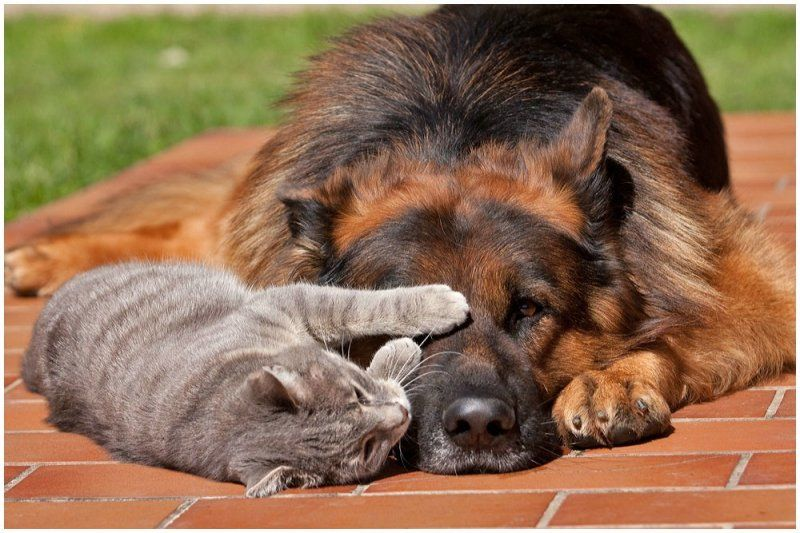 Мысли и картинки о дружбе животных