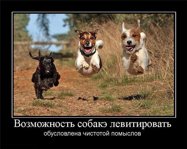 Собаки, собачки, собачёнки...