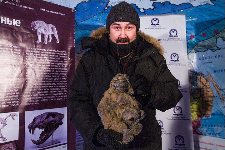 В Якутии обнаружили детёнышей пещерного льва