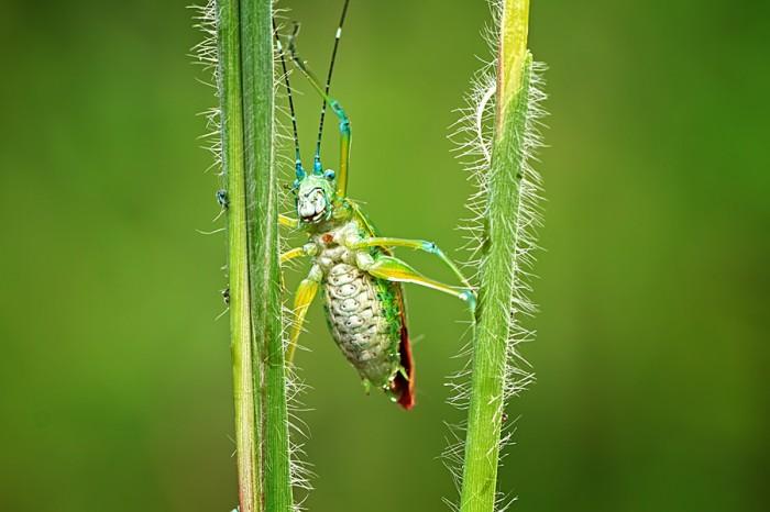 Жизнь насекомых и земноводны…