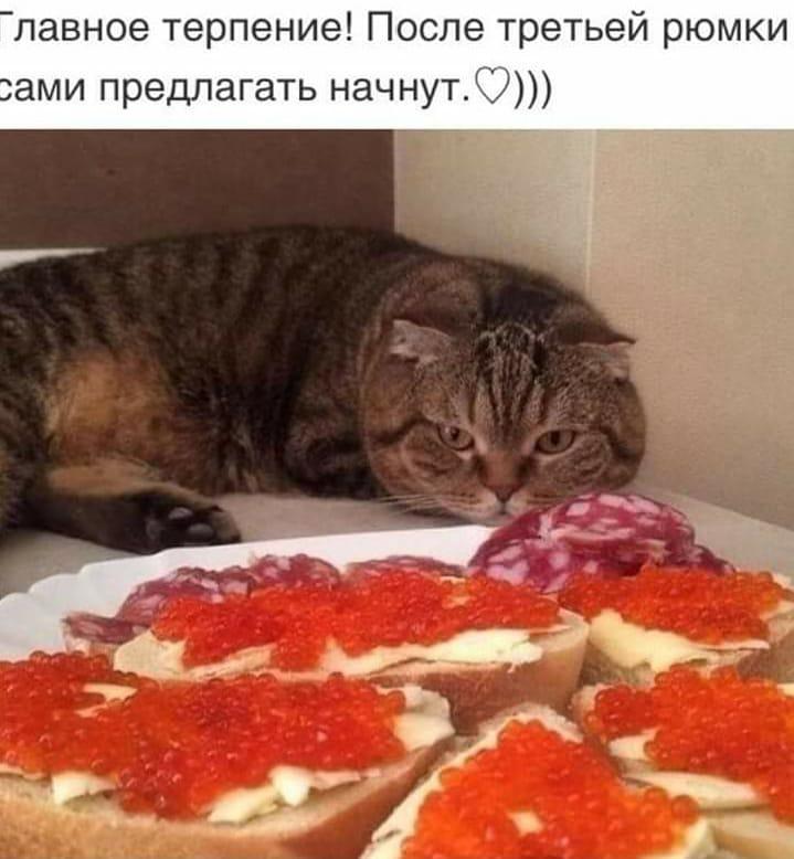 https://mtdata.ru/u23/photoD1AD/20052498250-0/original.jpeg#20052498250