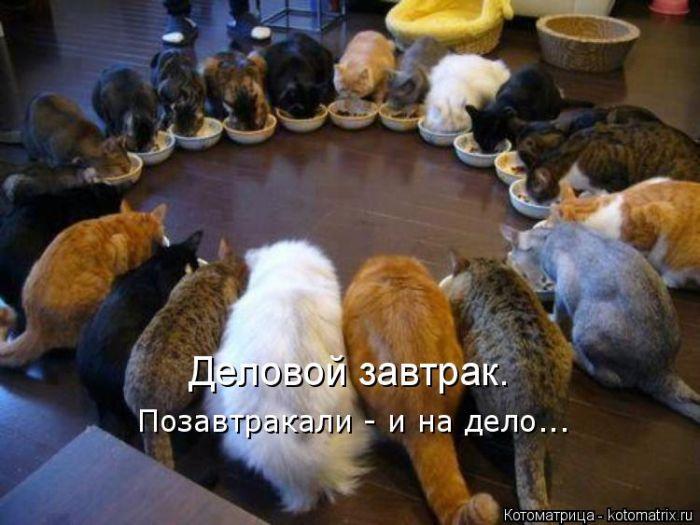 Самые прикольные котоматрицы…